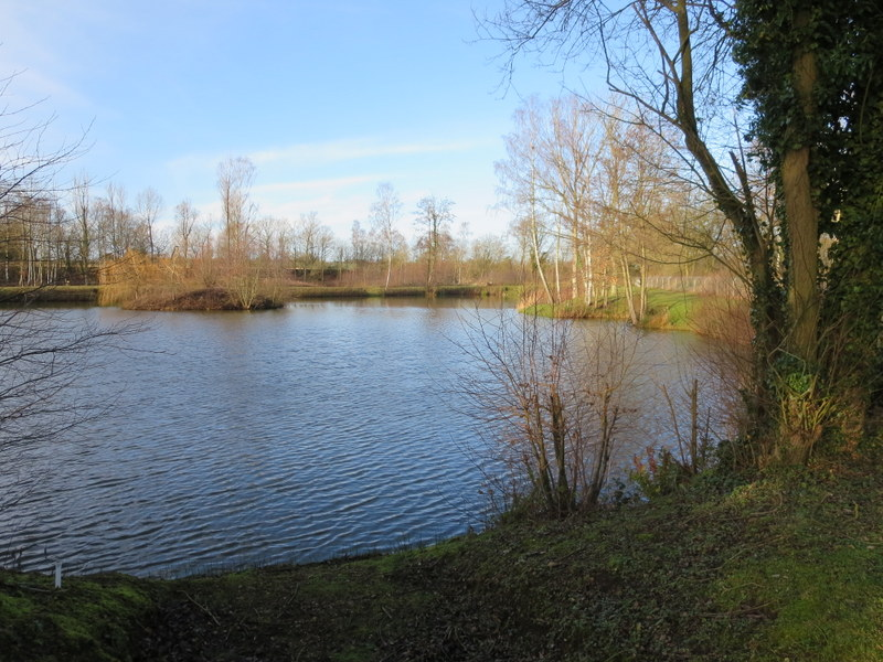 Puppy lake 2